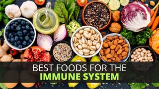 Best Foods for the Immune System